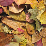 Autumn Leaves Background Imagen de archivo