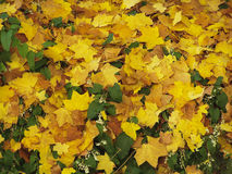 Autumn Leaves Background Stockbilder