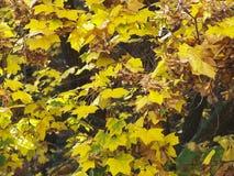 Autumn Leaves Background Photos stock