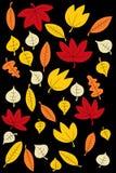 Autumn Leaves Background Photo stock