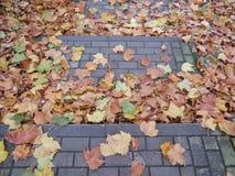 Autumn Leaves Background Imagen de archivo libre de regalías