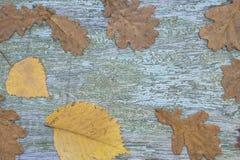 Autumn Leaves Background Images libres de droits