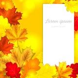 Autumn Leaves Background Fotos de archivo