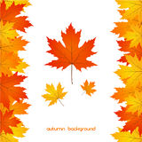 Autumn Leaves Background Photos stock