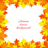 Autumn Leaves Background Photographie stock libre de droits