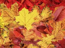 Autumn Leaves. Background Abstract stock photography
