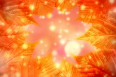 Autumn leaves background. Royalty Free Stock Photo