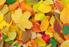 Autumn leaves background. Beautiful colorful autumn leaves background Stock Photography