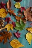 Autumn Leaves Background Beschaffenheit der gefallenen Blätter Herbstlicher Hintergrund Stockfoto