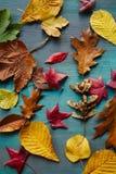 Autumn Leaves Background Beschaffenheit der gefallenen Blätter Herbstlicher Hintergrund Lizenzfreies Stockfoto