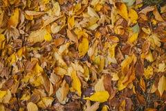 Autumn Leaves Background Beschaffenheit von gefallenen Blättern im Herbst Herbst im Holz Stockfotos