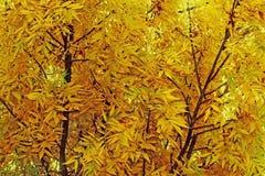 Autumn leaves background branch leaf, autumn colors.  Stock Photos