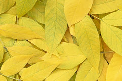Autumn leaves background. Close up Stock Images