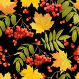 Autumn Leaves Background coloré - modèle sans couture Images libres de droits