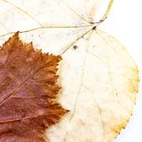 Autumn leaves background composition - fawn chequers and yellow linden stock images