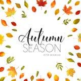 Autumn Leaves Background Conception florale de bannière Photo libre de droits