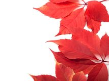 Autumn leaves background with copy space Stock Image