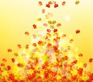 Autumn leaves background. For design Royalty Free Stock Image