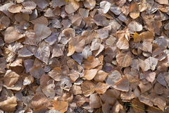 Autumn leaves background. Stock Image
