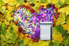 Autumn leaves background with empty paper Stock Photography