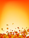 Autumn leaves background. EPS 8 Royalty Free Stock Images