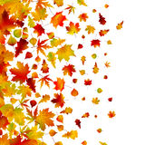 Autumn leaves, background. EPS 8 Royalty Free Stock Image