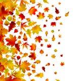 Autumn Leaves, Background. EPS 8 Royalty Free Stock Image