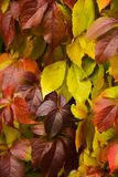 Autumn leaves background.Autumn fall Royalty Free Stock Image