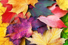 Autumn leaves background. Leaves of fall, decorative and colorful background Stock Image