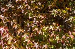 Autumn leaves background. Fall foliage texture Stock Photos