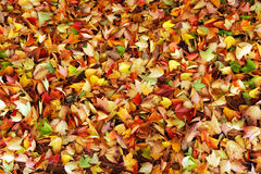 Autumn leaves background. Fallen leaves in autumn as background for design Stock Photo