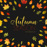 Autumn Leaves Background. Floral Banner Design Stock Photos