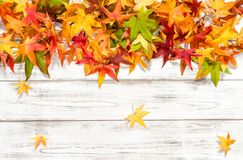 Autumn leaves background Floral border. Autumn leaves on bright wooden background. Floral border Royalty Free Stock Image