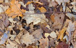 Autumn Leaves Background Folhas caídas na terra fotos de stock