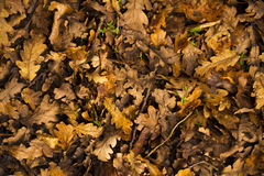 Autumn Leaves Background. In the forrest Stock Images