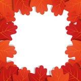 Autumn leaves background. Frame of vector oak leaves.  Stock Images