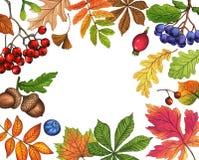 Autumn Leaves Background Framw en baisse de feuilles de nature illustration libre de droits