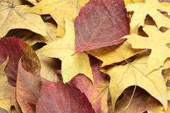 Autumn leaves background. Background full of beautiful Autumn dry leaves Stock Photos