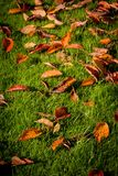 Autumn leaves background with green grass. Close up stock image
