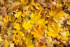 Fall leaves background Stock Photos