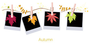 Autumn leaves background with hanging leaf and blank photo vector illustration Stock Photos