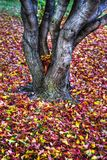 Autumn leaves Background in HDR High Dynamic Range Royalty Free Stock Photo