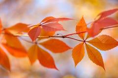 Autumn leaves background, horizontal background Stock Image