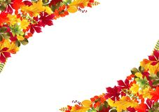 Autumn leaves background. Illustration of Autumn leaves background Stock Photo
