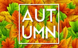 Autumn leaves background. Illustration of Autumn leaves background Royalty Free Stock Photo