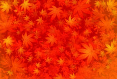 Autumn leaves. Background of autumn leaf color Stock Image