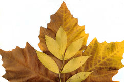 Autumn leaves background leafs Stock Photography