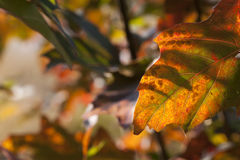 Autumn leaves background leafs Royalty Free Stock Photos