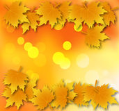 Autumn leaves background with leaves on top and bottom. Abstract background with autumn leaves, vector art illustration Stock Images