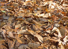 Autumn leaves background. Lot of dry fallen foliage Stock Photos